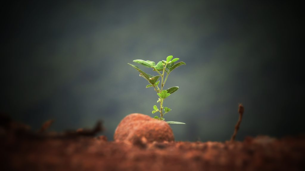 Seedling - a picture of hope